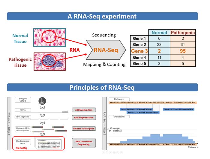 Présentation d'une expérience RNA-Seq