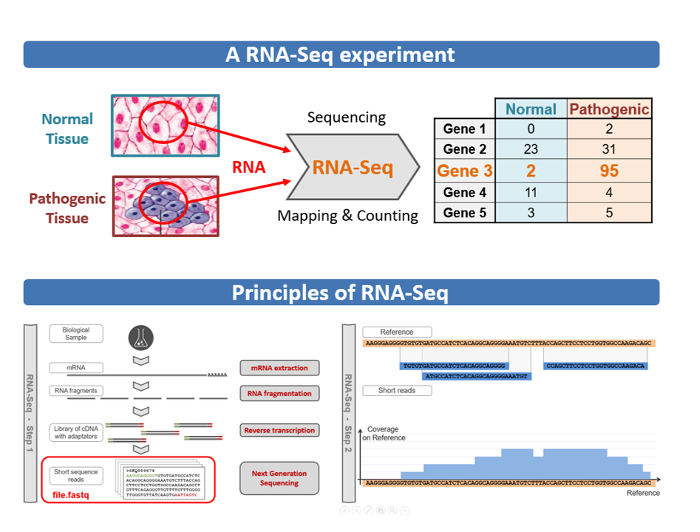 RNA Sequencing Presentation
