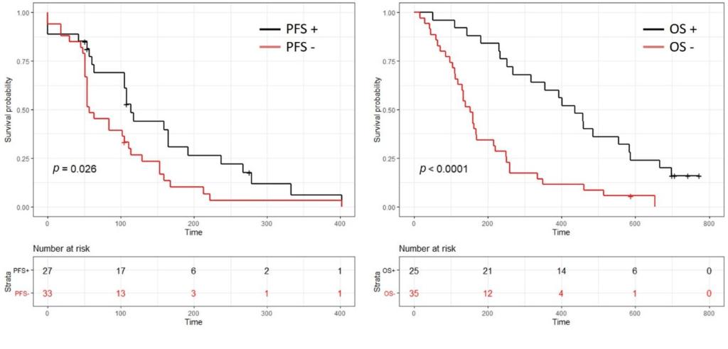 Courbes montrant les effets sur la survie des patients atteints du cancer du pancréas lorsque le traitement à la gemcitabine s'est avéré positif.